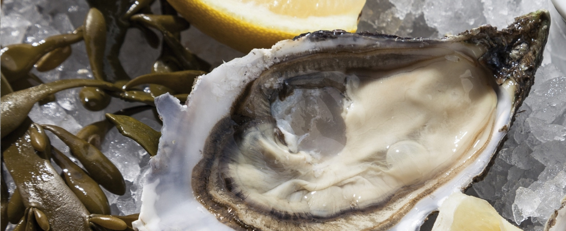 Oyster season has arrived at the Crowne Plaza Geneva